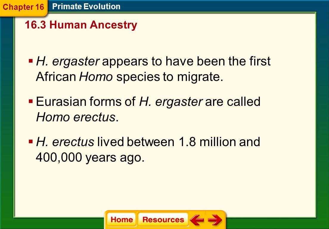 Primate Evolution Homo ergaster 16.3 Human Ancestry Chapter 16