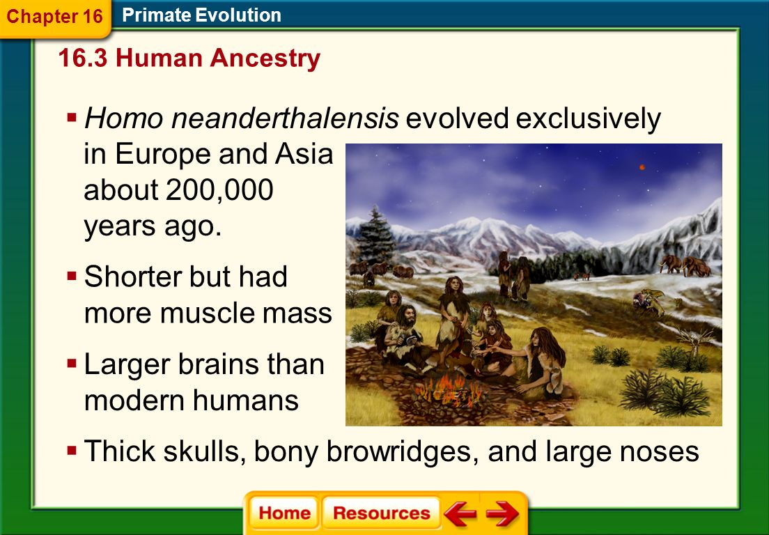 Primate Evolution About 1 m tall Brain and body proportions like all the australopithecines. 16.3 Human Ancestry Chapter 16 Homo floresiensis lived ab