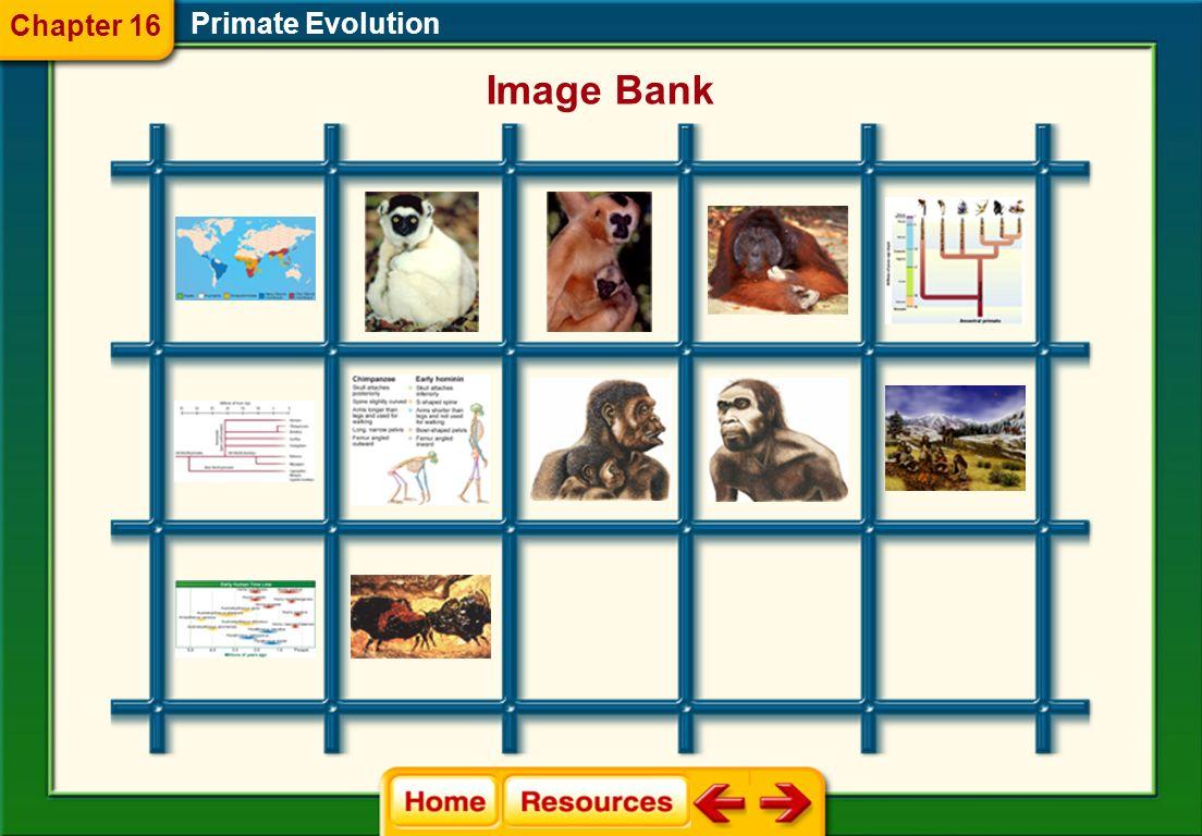 Primate Evolution Chapter 16 Glencoe Biology Transparencies