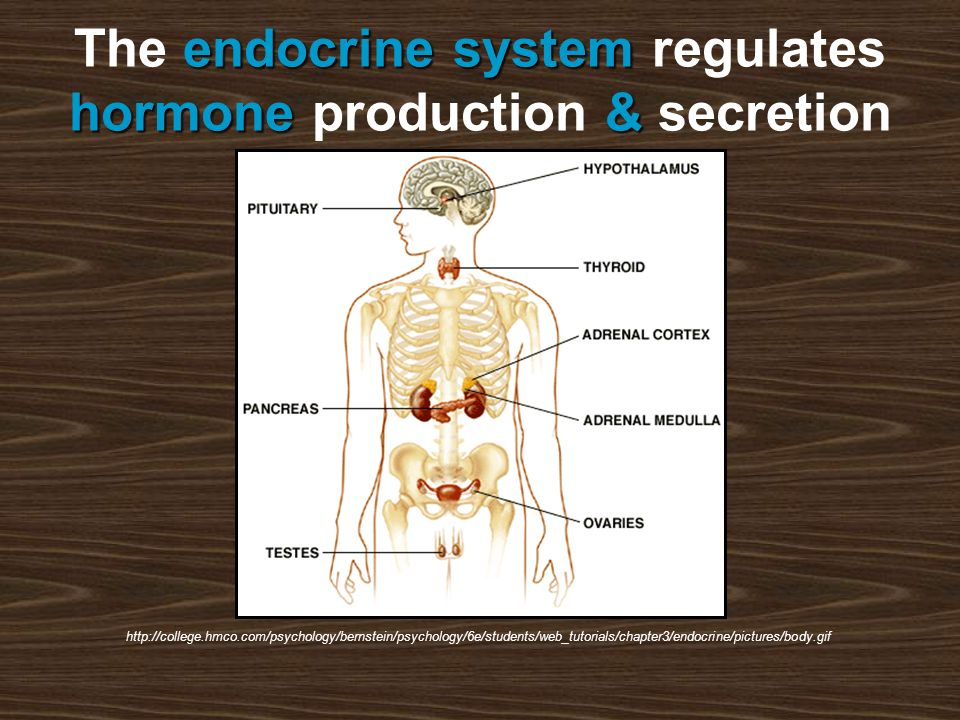 endocrine system hormone& The endocrine system regulates hormone production & secretion http://college.hmco.com/psychology/bernstein/psychology/6e/students/web_tutorials/chapter3/endocrine/pictures/body.gif