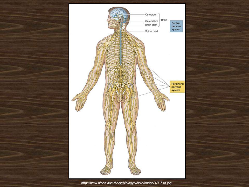 http://www.bioon.com/book/biology/whole/image/1/1-7.tif.jpg