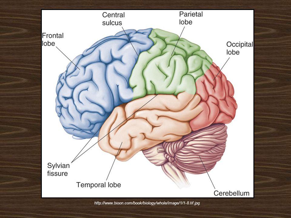 http://www.bioon.com/book/biology/whole/image/1/1-8.tif.jpg
