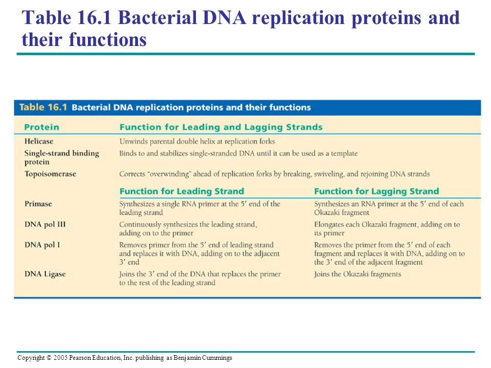 Copyright © 2005 Pearson Education, Inc. publishing as Benjamin Cummings Table 16.1 Bacterial DNA replication proteins and their functions