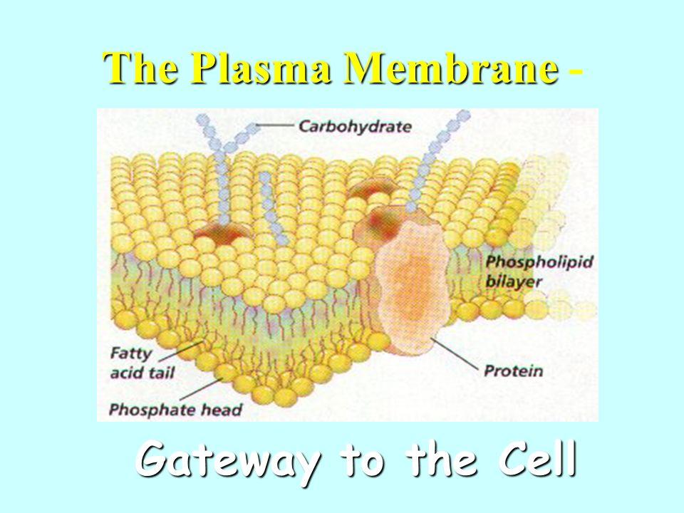 The Plasma Membrane The Plasma Membrane - Gateway to the Cell