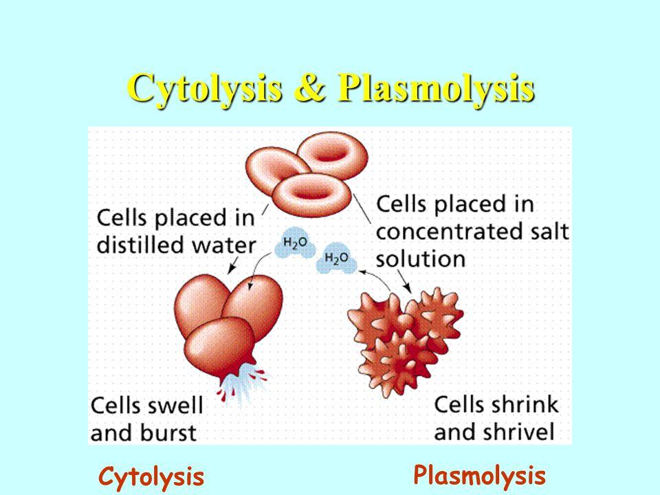 Cytolysis & Plasmolysis Cytolysis Plasmolysis