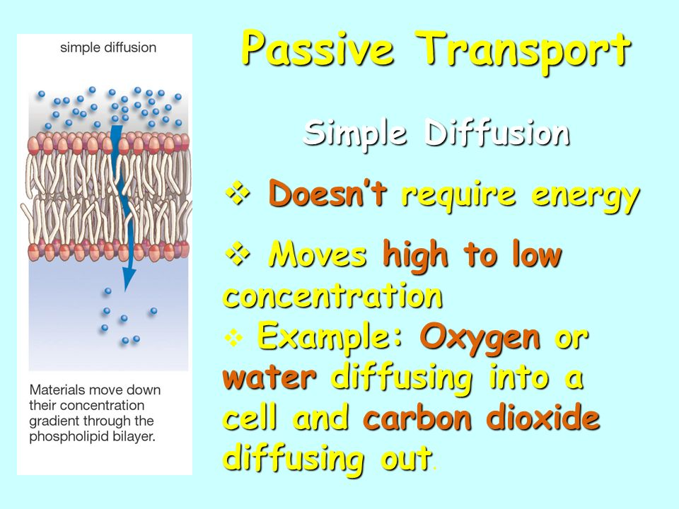 Passive Transport Simple Diffusion Doesnt require energy Doesnt require energy Moves high to low concentration Moves high to low concentration Example