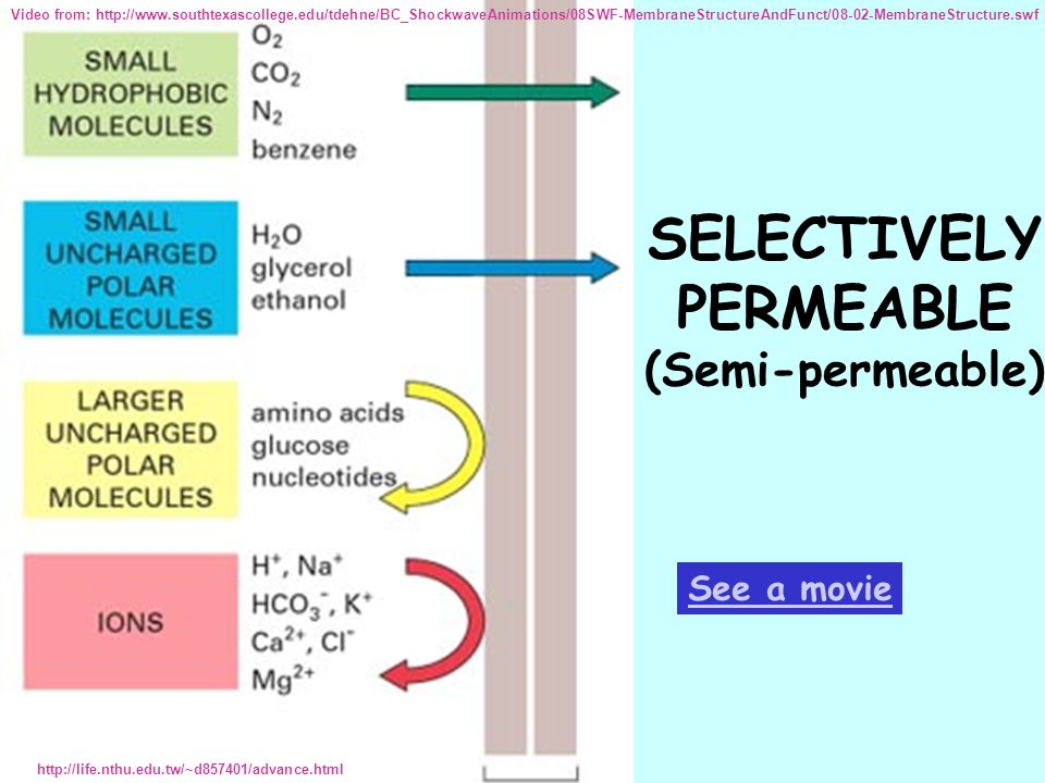 SELECTIVELY PERMEABLE (Semi-permeable) http://life.nthu.edu.tw/~d857401/advance.html See a movie Video from: http://www.southtexascollege.edu/tdehne/B