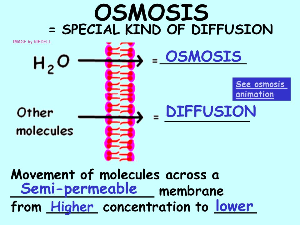 OSMOSIS = SPECIAL KIND OF DIFFUSION IMAGE by RIEDELL See osmosis animation ____________ __________ OSMOSIS DIFFUSION Movement of molecules across a __