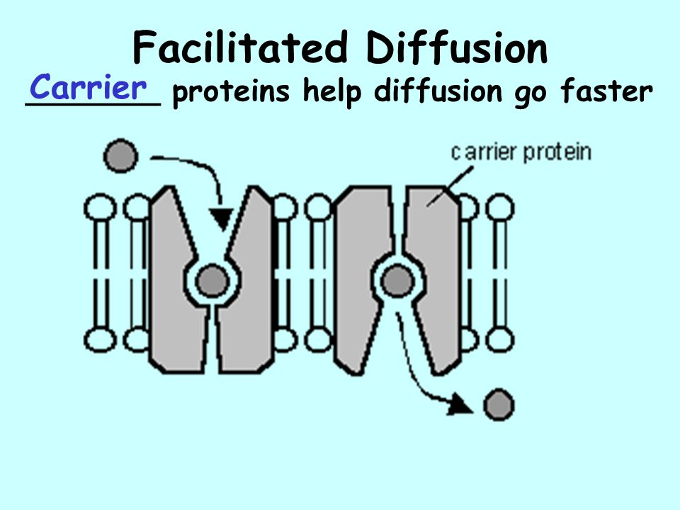Facilitated Diffusion _______ proteins help diffusion go faster Carrier