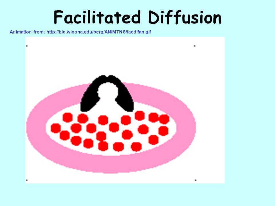 Facilitated Diffusion Animation from: http://bio.winona.edu/berg/ANIMTNS/facdifan.gif