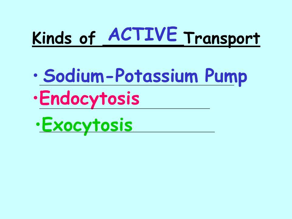 Kinds of ________Transport Sodium-Potassium Pump Endocytosis Exocytosis ________________________________________ ___________________________________ _