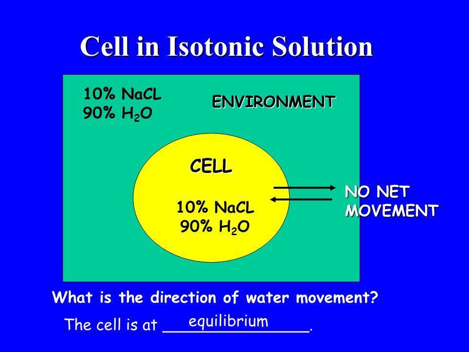 Cell in Isotonic Solution CELL 10% NaCL 90% H 2 O 10% NaCL 90% H 2 O What is the direction of water movement? The cell is at _______________. equilibr