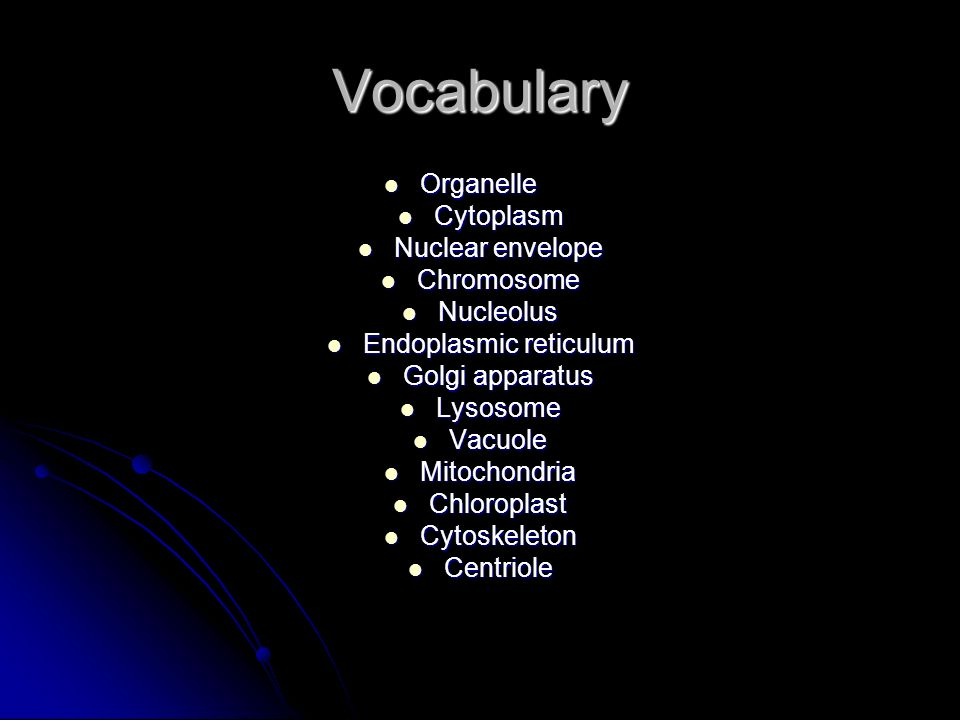 Vocabulary Organelle Organelle Cytoplasm Cytoplasm Nuclear envelope Nuclear envelope Chromosome Chromosome Nucleolus Nucleolus Endoplasmic reticulum E