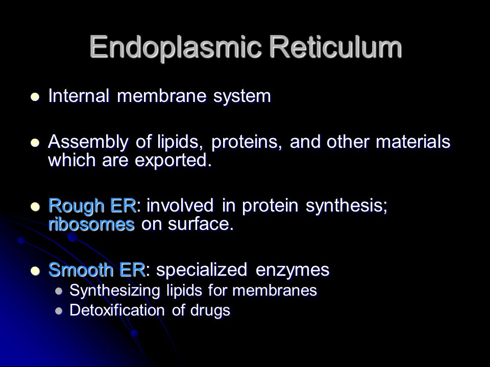 Endoplasmic Reticulum Internal membrane system Internal membrane system Assembly of lipids, proteins, and other materials which are exported. Assembly