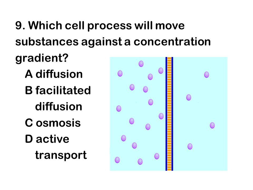 9. Which cell process will move substances against a concentration gradient? A diffusion B facilitated diffusion C osmosis D active transport