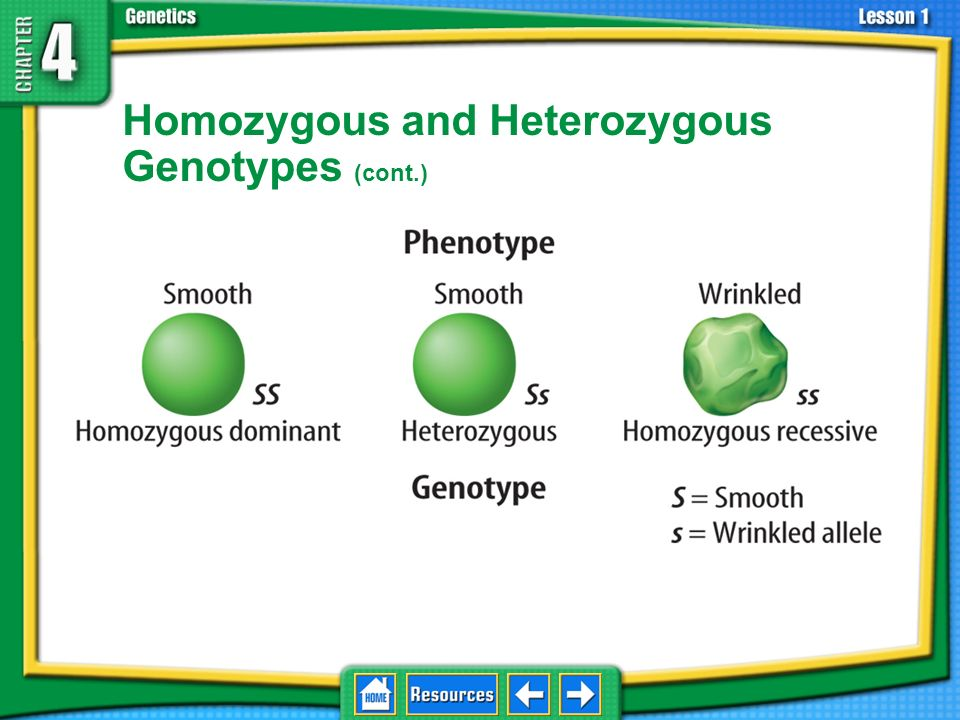 Homozygous and Heterozygous Genotypes Because eukaryotes have pairs of chromosomes, a genotype for a gene has two alleles. 4.1 Foundations of Genetics