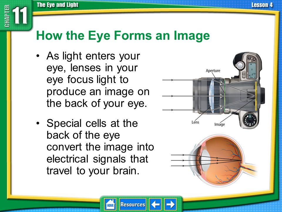 11.4The Eye and Vision cornea pupil iris retina pigment