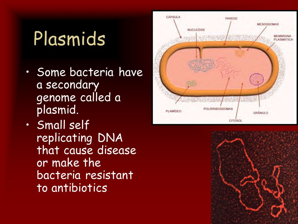 Plasmids Some bacteria have a secondary genome called a plasmid. Small self replicating DNA that cause disease or make the bacteria resistant to antib