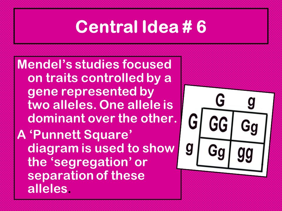 Central Idea # 6 Mendels studies focused on traits controlled by a gene represented by two alleles. One allele is dominant over the other. A Punnett S