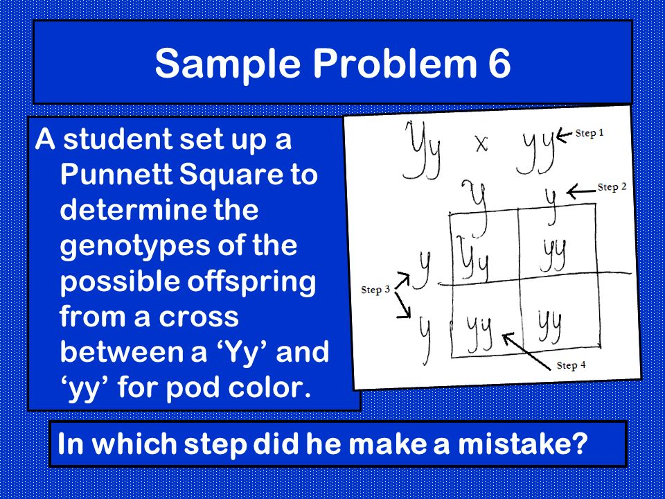 Sample Problem 6 A student set up a Punnett Square to determine the genotypes of the possible offspring from a cross between a Yy and yy for pod color.