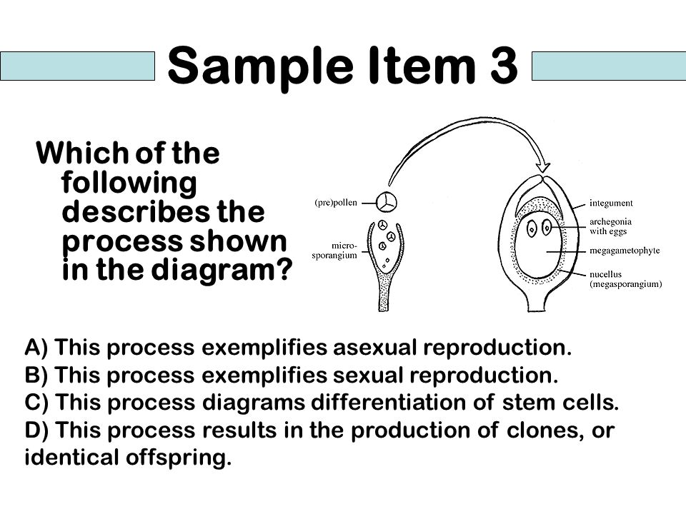 Sample Item 3 Which of the following describes the process shown in the diagram? A) This process exemplifies asexual reproduction. B) This process exe