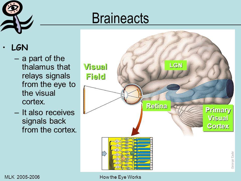MLK 2005-2006How the Eye Works Neuron – Neervvve Cellllls