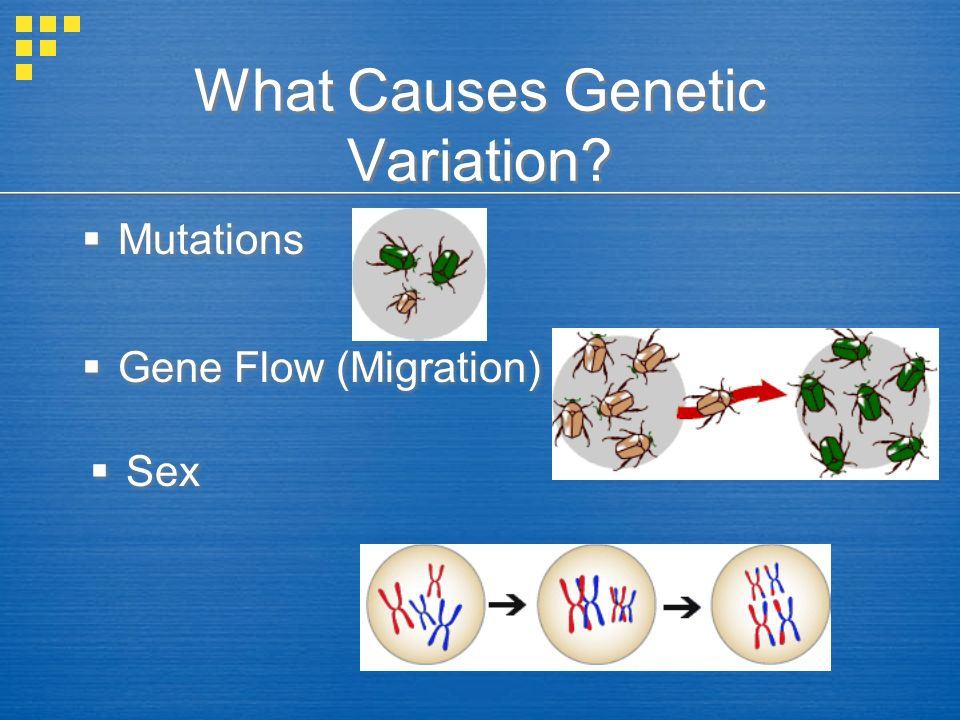 What Causes Genetic Variation? Mutations Mutations Gene Flow (Migration) Gene Flow (Migration) Sex Sex