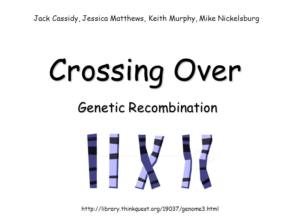 Crossing Over Genetic Recombination http://library.thinkquest.org/19037/genome3.html Jack Cassidy, Jessica Matthews, Keith Murphy, Mike Nickelsburg