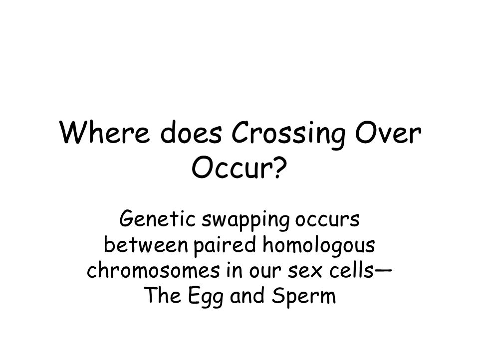 Where does Crossing Over Occur? Genetic swapping occurs between paired homologous chromosomes in our sex cells The Egg and Sperm