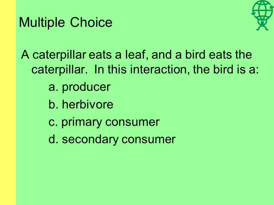 Multiple Choice A caterpillar eats a leaf, and a bird eats the caterpillar.