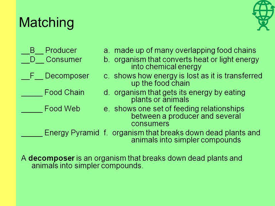 Matching __B__ Producera. made up of many overlapping food chains __D__ Consumerb. organism that converts heat or light energy into chemical energy __