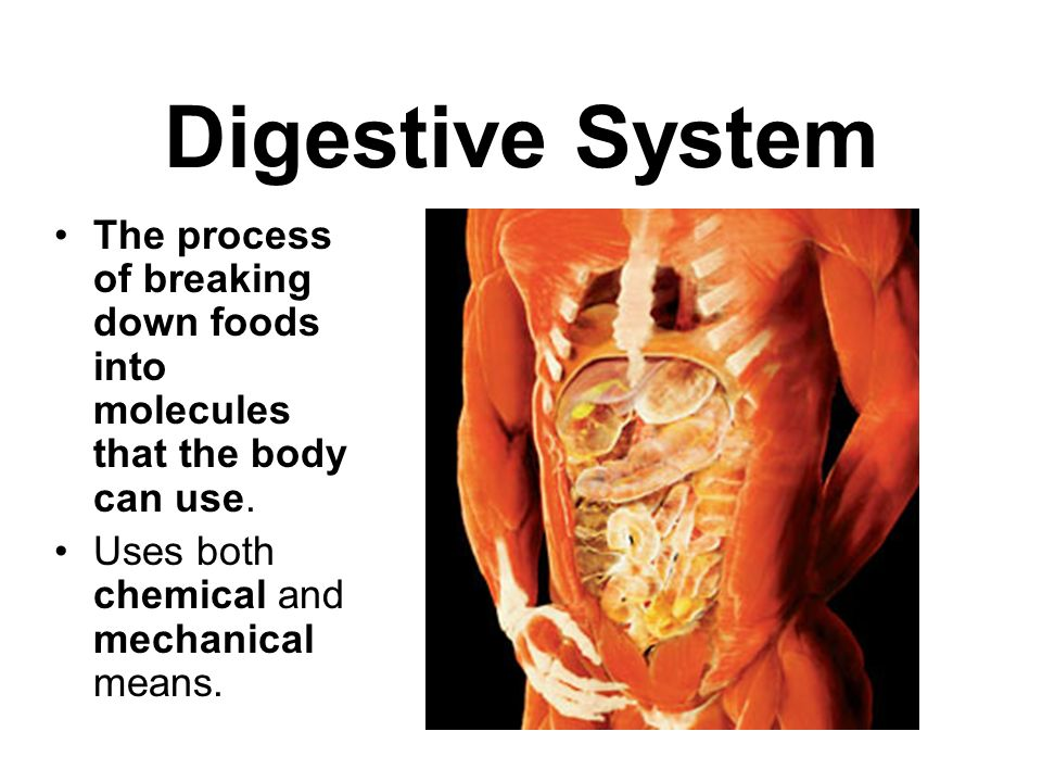 Digestive System The process of breaking down foods into molecules that the body can use. Uses both chemical and mechanical means.