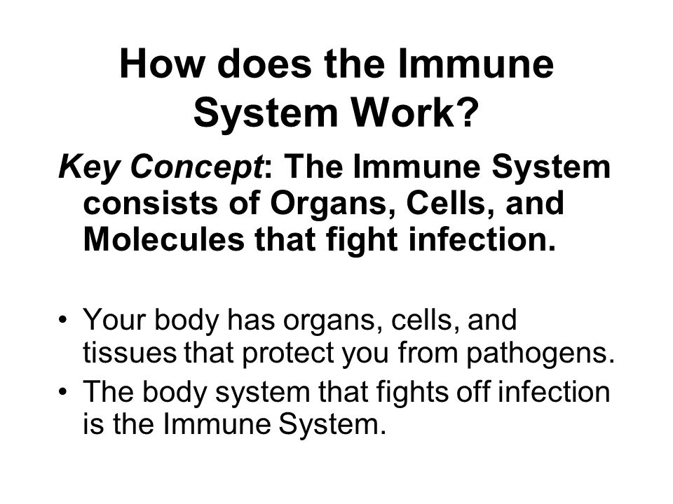 How does the Immune System Work? Key Concept: The Immune System consists of Organs, Cells, and Molecules that fight infection. Your body has organs, c