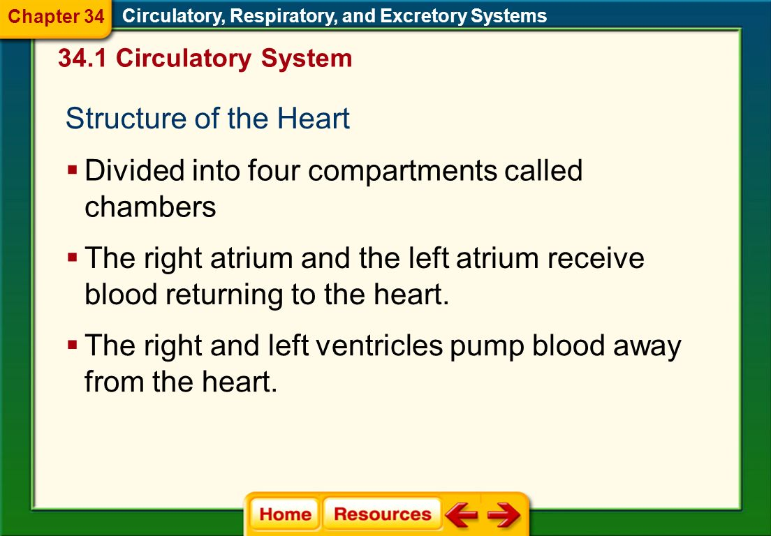 The Heart Circulatory, Respiratory, and Excretory Systems A hollow, muscular organ that pumps blood throughout the body Pumps oxygenated blood to the
