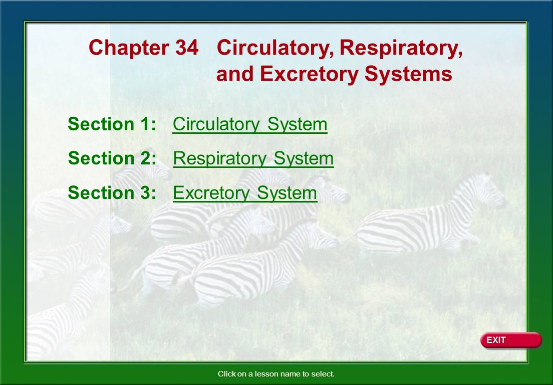 Circulatory, Respiratory, and Excretory Systems Blood Types There are four types of bloodA, B, AB, and O.