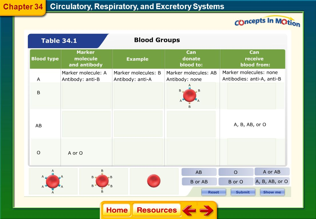 Circulatory, Respiratory, and Excretory Systems Blood Types There are four types of bloodA, B, AB, and O. Rh Factor Another marker found on the surfac