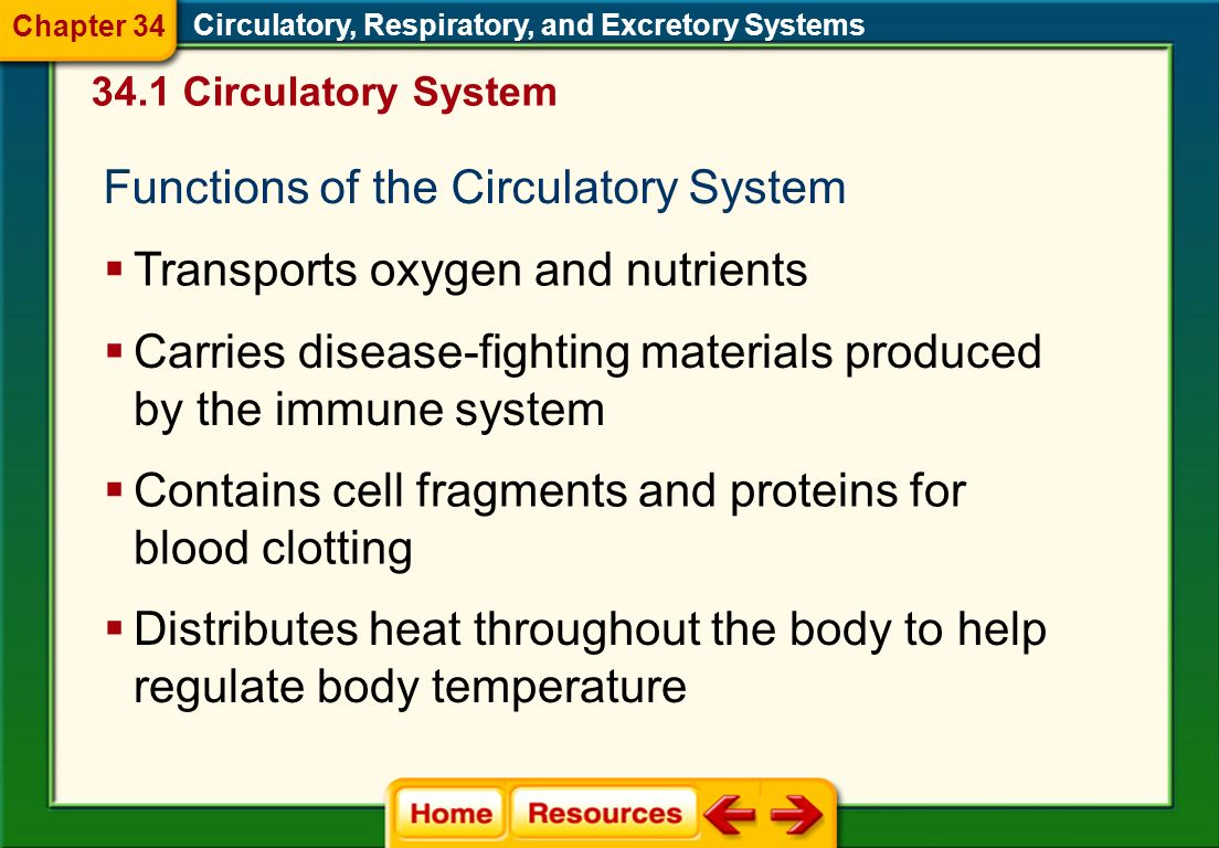 34.1 Circulatory System Functions of the Circulatory System Circulatory, Respiratory, and Excretory Systems Transports oxygen and nutrients Carries disease-fighting materials produced by the immune system Contains cell fragments and proteins for blood clotting Distributes heat throughout the body to help regulate body temperature Chapter 34