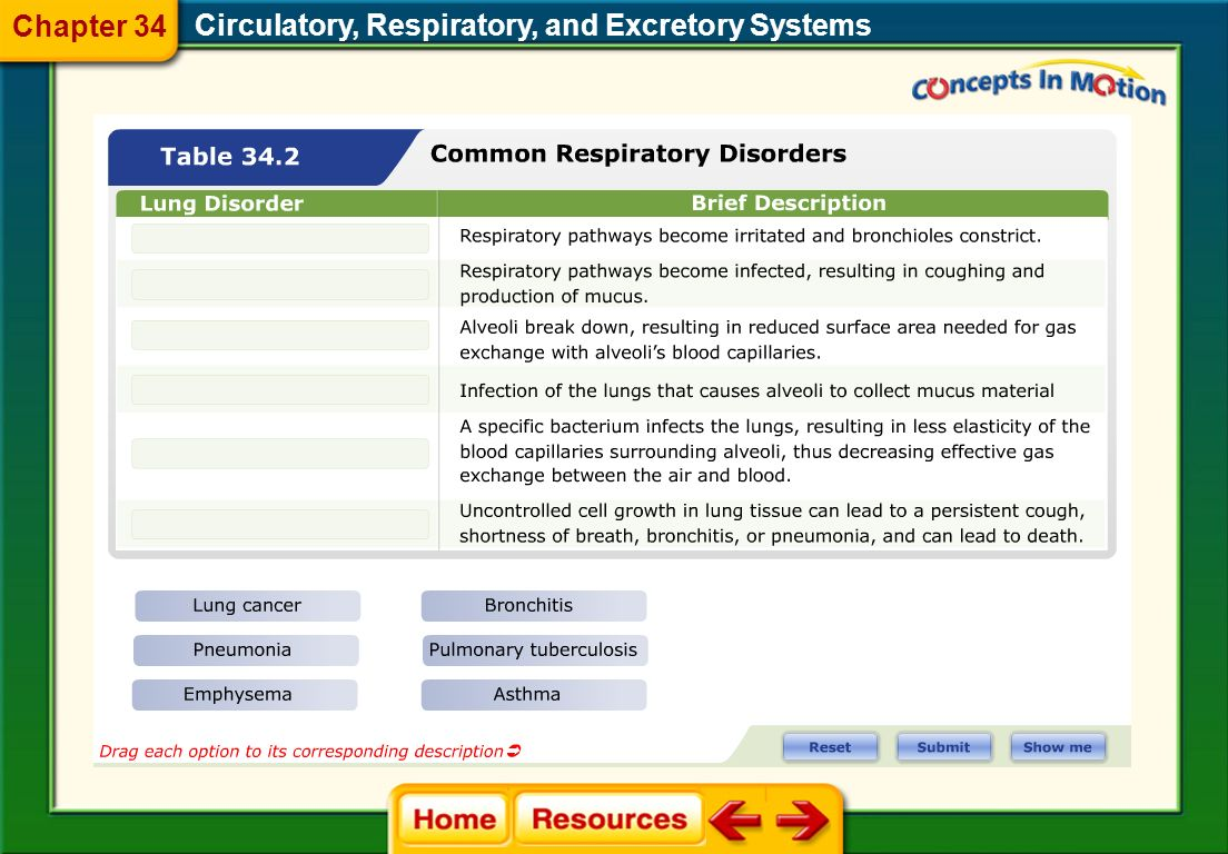 Circulatory, Respiratory, and Excretory Systems Chapter 34 34.2 Respiratory System