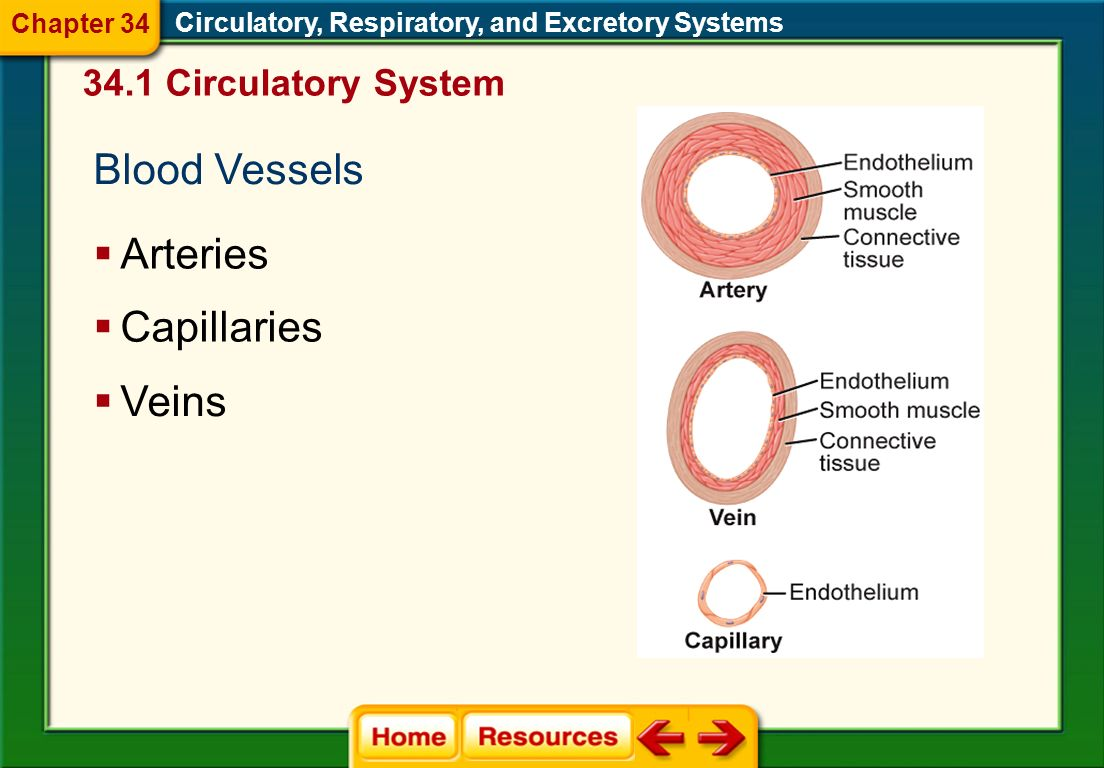 What is the role of the skin in the excretory system.