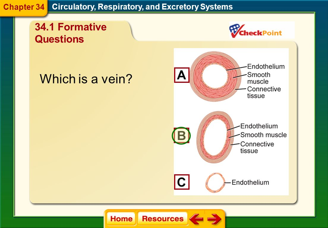 Chapter Diagnostic Questions Circulatory, Respiratory, and Excretory Systems Chapter 34 Name the blood component that is helpful in clotting. A. plate