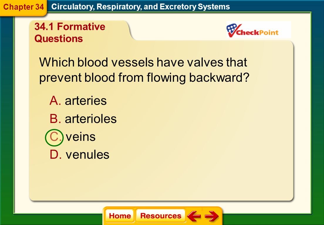 Which is a vein? 34.1 Formative Questions Circulatory, Respiratory, and Excretory Systems Chapter 34