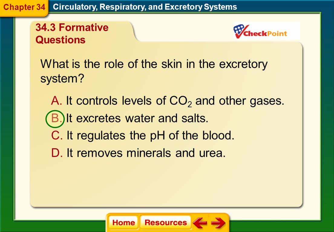 Which is an example of internal respiration? 34.2 Formative Questions Circulatory, Respiratory, and Excretory Systems Chapter 34 D. Oxygen in red bloo