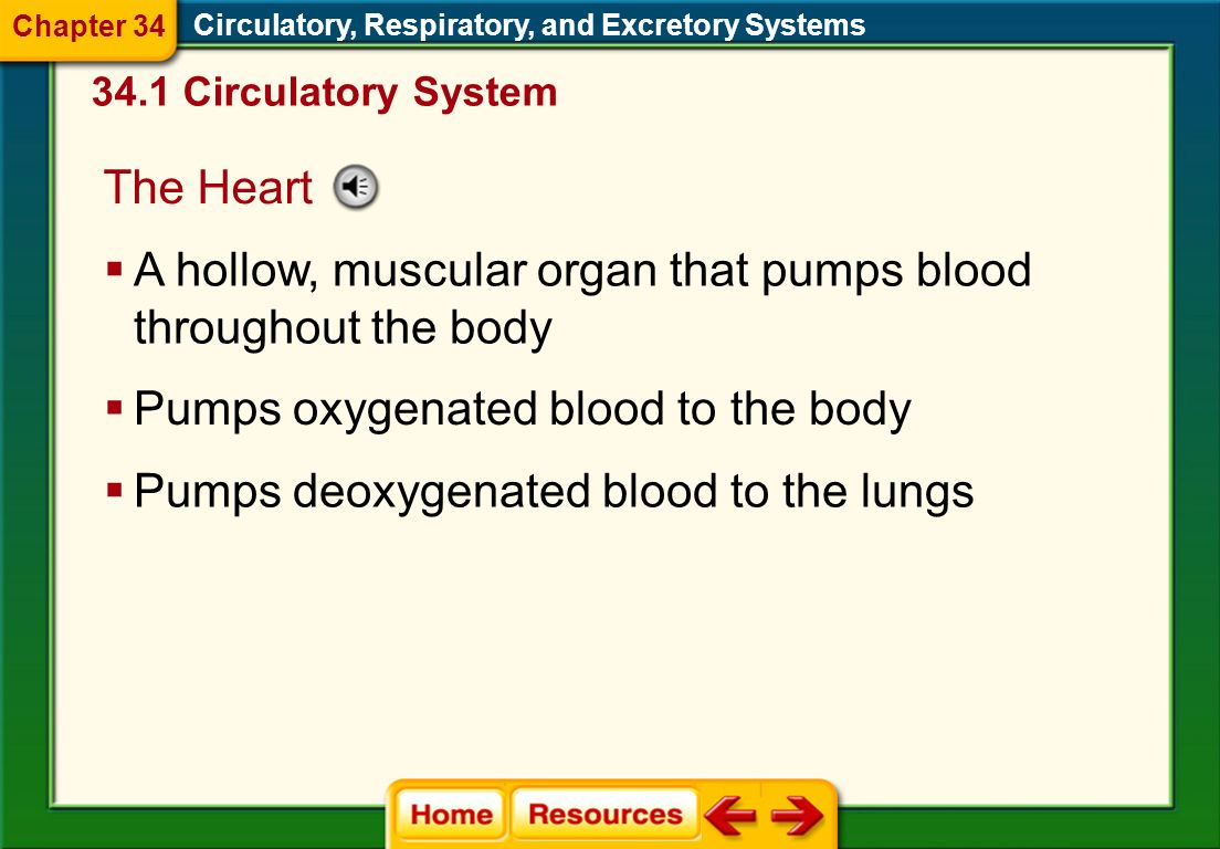 artery capillary vein valve heart pacemaker plasma red blood cell platelet white blood cell atherosclerosis Circulatory, Respiratory, and Excretory Systems Chapter 34 Vocabulary Section 1