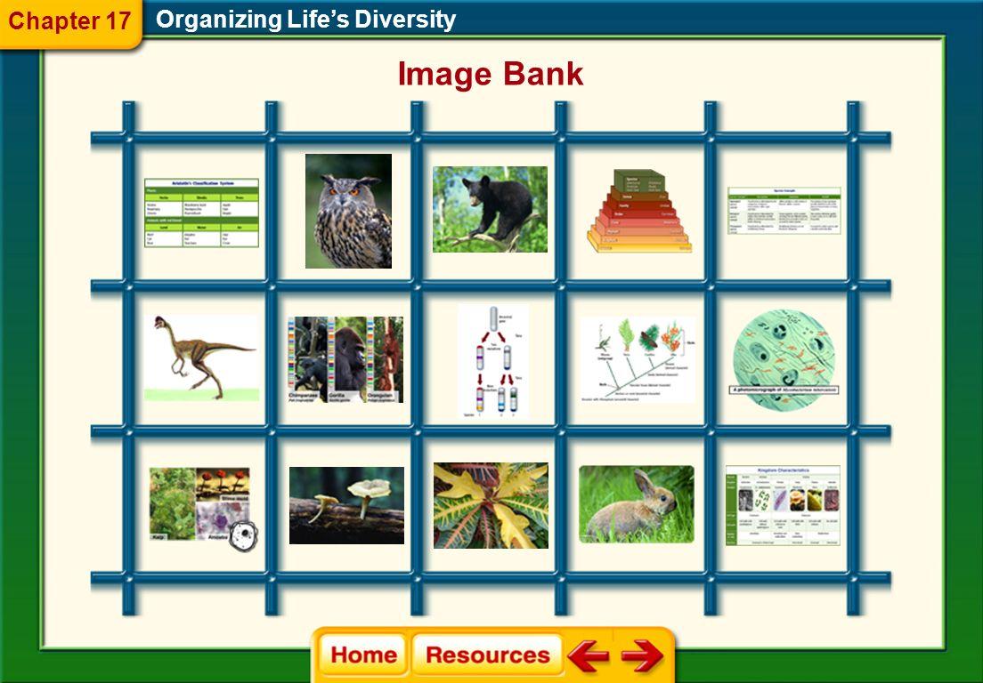 Organizing Lifes Diversity Glencoe Biology Transparencies Chapter 17