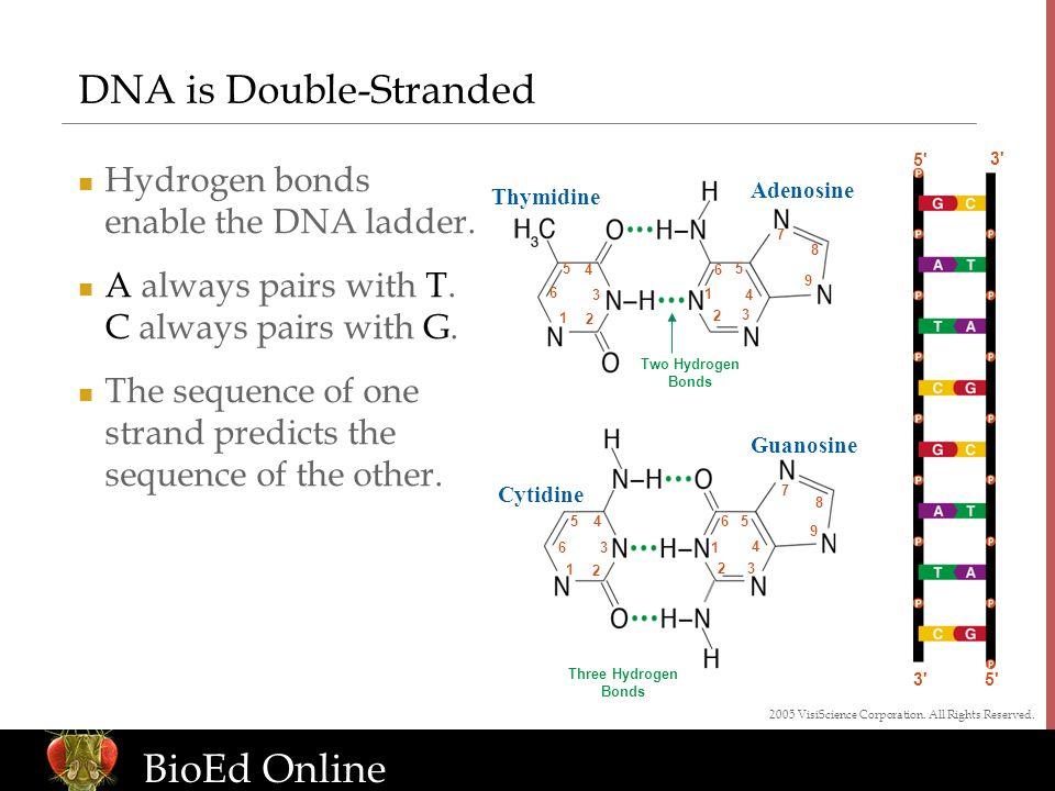 www.BioEdOnline.org BioEd Online 5' 3' DNA is Double-Stranded Hydrogen bonds enable the DNA ladder. A always pairs with T. C always pairs with G. The