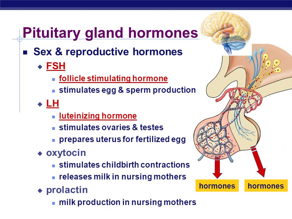 Regents Biology Sex & Growth Hormones Large scale body changes how do they work turn genes on start new processes in the body by turning genes on that