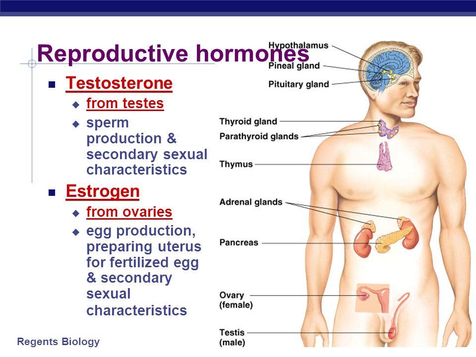 Regents Biology Pituitary gland hormones Sex & reproductive hormones FSH follicle stimulating hormone stimulates egg & sperm production LH luteinizing