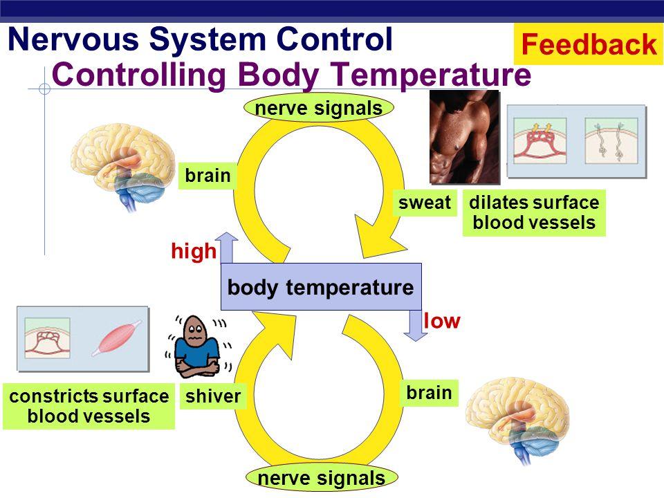Regents Biology Regulation How we maintain homeostasis nervous system nerve signals control body functions endocrine system hormones chemical signals