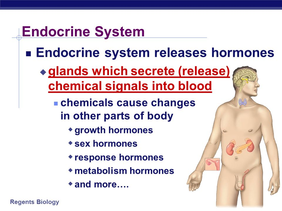 Regents Biology Hormones Why are hormones needed? chemical messages from one body part to cells in other parts of body communication needed to coordin