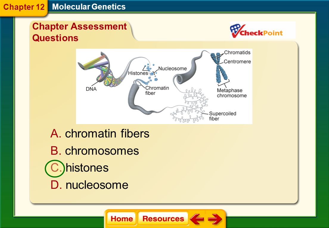 Look at the following figure. Identify the proteins that DNA first coils around. Molecular Genetics Chapter Assessment Questions Chapter 12